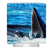Whale's Opening Mouth Shower Curtain by Paul Ge