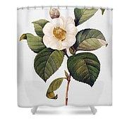 White Camellia Shower Curtain by Granger