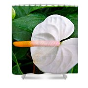 White Flamingo Flower Shower Curtain by Lanjee Chee