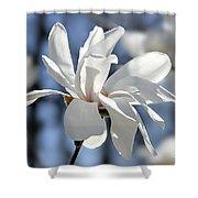 White Magnolia  Shower Curtain by Elena Elisseeva