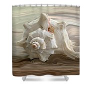 White shell Shower Curtain by Linda Sannuti