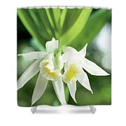 White Thunia Shower Curtain by Indian School