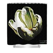 White Tulip Shower Curtain by Sarah Loft