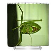 Who Are You Eyeballin' Shower Curtain by DigiArt Diaries by Vicky B Fuller