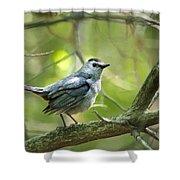 Wild Birds - Gray Catbird Shower Curtain by Christina Rollo