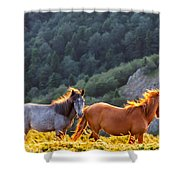 Wild Horses Shower Curtain by Evgeni Dinev