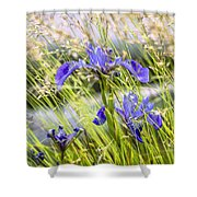 Wild Irises Shower Curtain by Marty Saccone