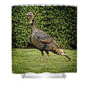 Wild Turkey Shower Curtain by Kelley King