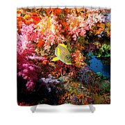 Yellow Banded Sweetlip Fish And Coral Shower Curtain by Beverly Factor