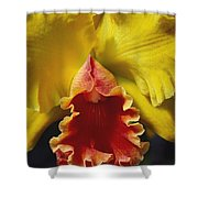Yellow Cattleya Orchid Shower Curtain by Greg Vaughn - Printscapes