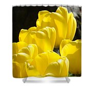 Yellow Tulips Floral Art Prints Nature Garden Shower Curtain by Baslee Troutman