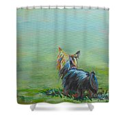 Yorkie In The Grass Shower Curtain by Kimberly Santini