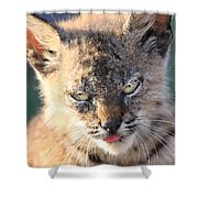 Young Bobcat 04 Shower Curtain by Wingsdomain Art and Photography