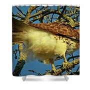 Young Red-tail Shower Curtain by Phill  Doherty