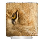 Your Lion Eye Shower Curtain by Carolyn Marshall