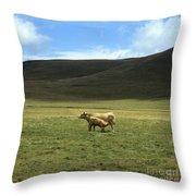 Cow And Calf. Aubrac . France. Throw Pillow by Bernard Jaubert