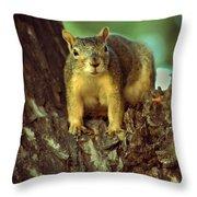 Fox Squirrel Throw Pillow by Robert Bales