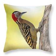 Hispaniolan Woodpecker Throw Pillow by Jim Nelson