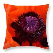 Orange Poppy Throw Pillow by Kathleen Struckle