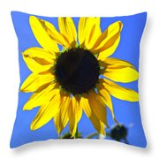 072 Throw Pillow by Marty Koch