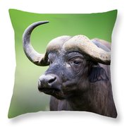 African Buffalo Portrait Throw Pillow by Johan Swanepoel
