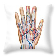 Anatomy Of Back Of Human Hand Throw Pillow by Stocktrek Images