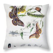 Australian Butterflies Throw Pillow by Philip Ralley