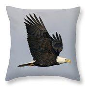 Bald Eagle In Flight Throw Pillow by Jim Zipp