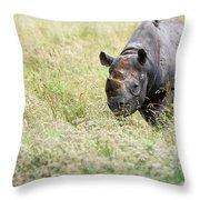 Black Rhinoceros Diceros Bicornis Michaeli In Captivity Throw Pillow by Matthew Gibson