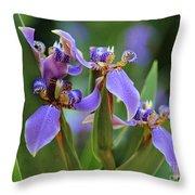 Blue Iris Drama Throw Pillow by Carol Groenen