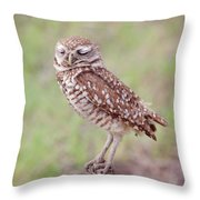 Burrowing Owl Throw Pillow by Kim Hojnacki