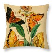 Chinese Butterflies 1847 Throw Pillow by Philip Ralley
