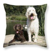 Chocolate And Cream Labradoodles Throw Pillow by John Daniels
