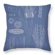 Desmarestia Ligulata Throw Pillow by Aged Pixel