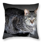 Grey Cat Portrait Throw Pillow by Elena Elisseeva