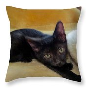 Hamming It Up Throw Pillow by Michelle Milano