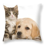 Labrador And Forest Cat Throw Pillow by Jean-Michel Labat