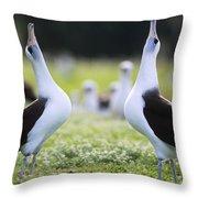 Laysan Albatross Courtship Dance Hawaii Throw Pillow by Tui De Roy
