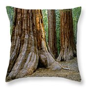 Mariposa Grove Throw Pillow by Bill Gallagher