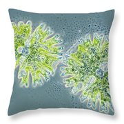 Micrasterias Throw Pillow by Michael Abbey