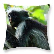 Red Colobus Monkey Throw Pillow by Aidan Moran