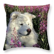 Shadows Throw Pillow by Fiona Kennard