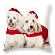 Two Cute Dogs In Santa Outfits Throw Pillow by Elena Elisseeva