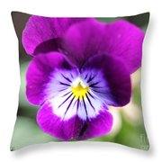 Viola Named Sorbet Plum Velvet Jump-up Throw Pillow by J McCombie
