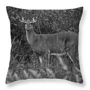 Well Hello There Throw Pillow by Frozen in Time Fine Art Photography