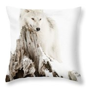 Arctic Wolf Pup Throw Pillow by Wolves Only
