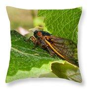 17 Year Cicada 2 Throw Pillow by Lara Ellis