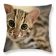 Asian Leopard Cub Throw Pillow by Laura Fasulo