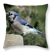 Bluejay Throw Pillow by Jim Nelson