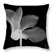 Cyclamen Flower X-ray Throw Pillow by Bert Myers